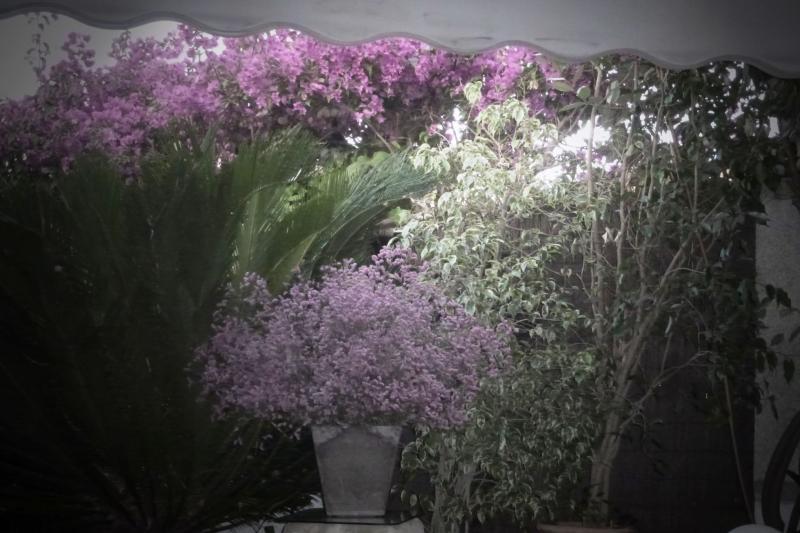 Bistro del Jardin, Alcudia